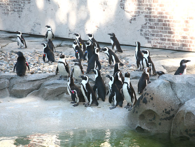 Penguin Coast Exhibit