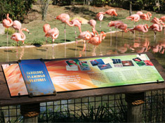 Nashville Zoo | Flamingo Lagoon Exhibit